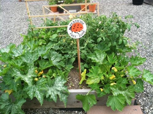 ZCC garden k